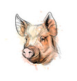 portrait a pig head chinese zodiac sign year vector image