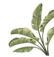 tropical botanical foliage plants green palm vector image vector image