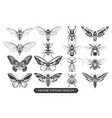 vintage insects collection vector image