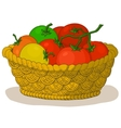 basket with tomatoes vector image vector image
