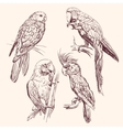 Parrot collection llustration vector image vector image