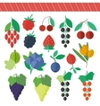 Berries elements set vector image