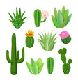 cacti and succulents with flowers vector image
