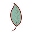 line color natural leaf plant botany design vector image vector image