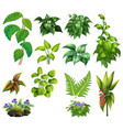 set decor plant vector image