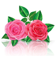 Beautiful pink and red rose vector image vector image