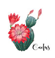 cactus in desert and hand vector image vector image