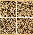 set leopard skin seamless pattern wild cat vector image