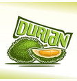 durian fruit vector image vector image