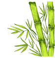 green juicy bamboo leaves branches stem decorative vector image