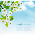 nature spring background with blossoming tree vector image vector image