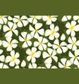 white plumeria flowers in simple elegant style vector image