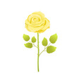 yellow rose flower with green leaves on long stem vector image vector image