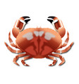 crab realistic vector image