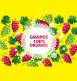 grapes fruit colorful circle copy space organic vector image