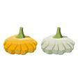 orange and green bush pumpkin vegetable vector image