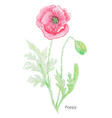 Poppy water color vector image vector image