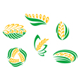 Symbols of cereal plants vector image vector image