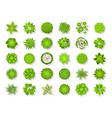 top view tree landscape plants and trees vector image vector image