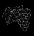 grapes outline hand drawn sketch on black vector image