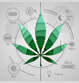 hand drawing realistic cannabis leaf many uses vector image