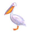 pelican watercolor white pelican hand drawn vector image