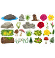 set rocks and flowers vector image vector image