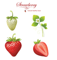 Strawberry realistic vector image vector image