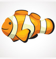 cute aquarium clown fish cartoon drawing vector image