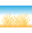 ripe yellow wheat ears vector image