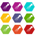 squid icon set color hexahedron vector image