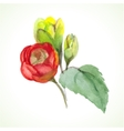 watercolor flower vector image vector image