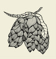 beer hop vector image vector image