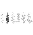 branches and leaves hand drawn floral elements vector image