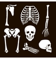Collection Human Skeleton vector image vector image