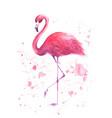 watercolor pink flamingo vector image