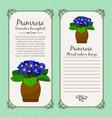vintage label with primrose plant vector image vector image