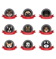 flat icons of pedigree dogs with the names vector image