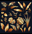 golden tropical plants set vector image