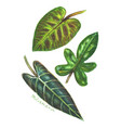 set of philodendron leaves vector image vector image