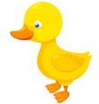 Little duck vector image