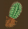 cactus with root vector image