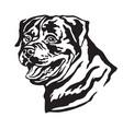 decorative portrait of dog rottweiler vector image