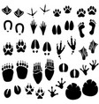 animal footprint track a set animal footprint vector image