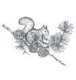 composition with hand drawn forest squirrel vector image vector image