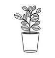 houseplant in pot icon vector image