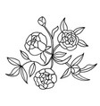 peony flower bouquet isolated on white vector image vector image