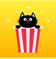 black cat sitting in popcorn box movie cinema vector image