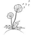 Dandelion Black outline sketch vector image