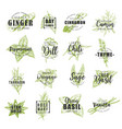 spice and herb leaf sketch label with lettering vector image